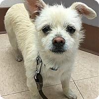 Adopt A Pet :: Blanca - Los Angeles, CA