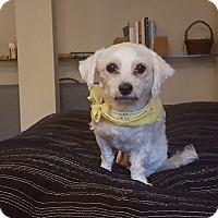 Adopt A Pet :: Suki - San Francisco, CA