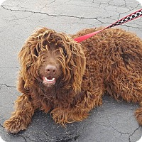 Adopt A Pet :: Walter - St John, IN