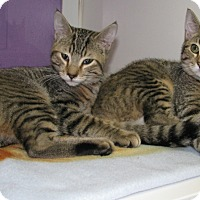 Adopt A Pet :: Raisin and Ruben - New Kensington, PA