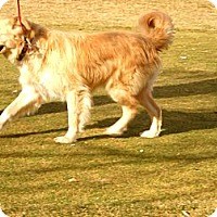 Adopt A Pet :: Tommy - Denver, CO