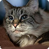 Adopt A Pet :: Sweetie - bloomfield, NJ