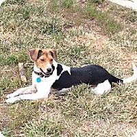 Adopt A Pet :: JOHNNY - Scottsburg, IN