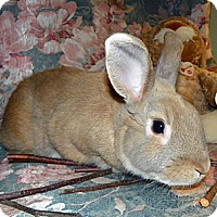 Adopt A Pet :: Weasley - North Gower, ON