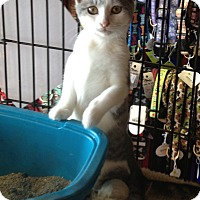 Adopt A Pet :: Lily - Horsham, PA