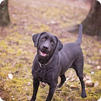Adopt A Pet :: Blanche - Lewisville, IN