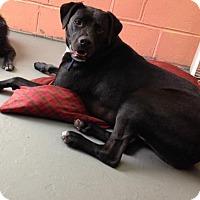 Adopt A Pet :: Stretch - Independence, MO
