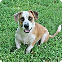 Adopt A Pet :: Martin - Lufkin, TX