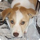 Adopt A Pet :: Shyniah