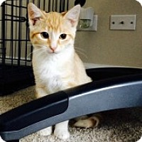 Adopt A Pet :: Gatsby - McHenry, IL