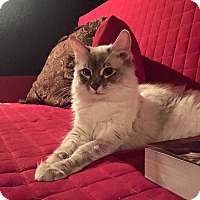 Adopt A Pet :: Miss Charlotte - Ennis, TX