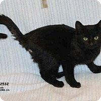 Adopt A Pet :: *SAMPSON - Hanford, CA