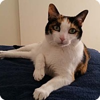 Adopt A Pet :: Callie - Laguna Woods, CA