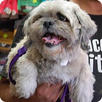 Adopt A Pet :: Muppet - Brooklyn, NY