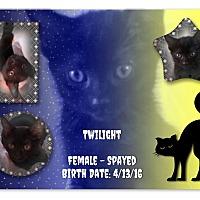 Adopt A Pet :: Twilight - Evans, WV