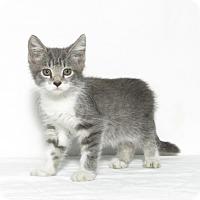 Adopt A Pet :: Lucy - Lufkin, TX