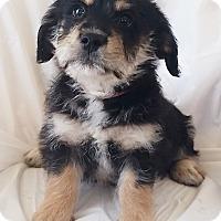 Adopt A Pet :: Sketchers - Mooresville, NC