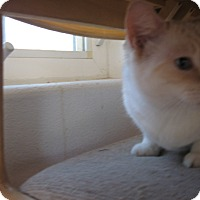 Adopt A Pet :: Franklin - Fallon, NV