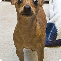 Adopt A Pet :: Buffy - Bellingham, WA