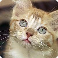 Adopt A Pet :: Freya - Verona, WI