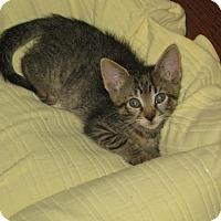 Adopt A Pet :: Katie - Flower Mound, TX