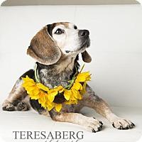 Adopt A Pet :: Maggie - McKinney, TX