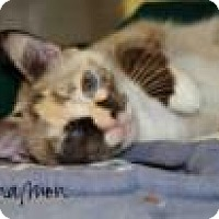 Adopt A Pet :: Cinnamon - Middleburg, FL