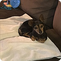 Adopt A Pet :: Betty - Denver City, TX