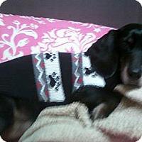 Adopt A Pet :: Buddy - Owatonna, MN