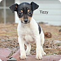 Adopt A Pet :: Tizzy~adopted! - Glastonbury, CT