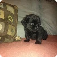 Adopt A Pet :: Onyx - Marlton, NJ