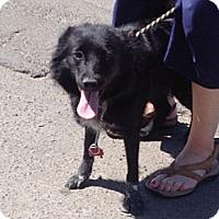 Adopt A Pet :: Lina - Rockaway, NJ