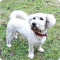 Adopt A Pet :: Philippe - Mocksville, NC