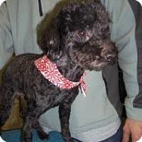 Adopt A Pet :: Meagan - Shawnee Mission, KS