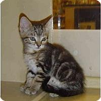 Adopt A Pet :: Samantha - Modesto, CA