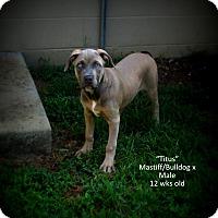 Adopt A Pet :: Titus - Gadsden, AL