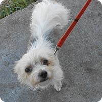 Adopt A Pet :: Miranda - Lockhart, TX