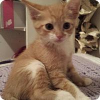 Adopt A Pet :: Bev's Honey - Yukon, OK