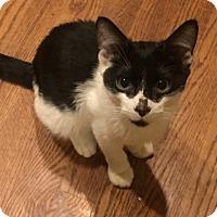 Adopt A Pet :: Timba - Philadelphia, PA
