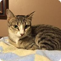 Adopt A Pet :: Maisie - O'Fallon, MO