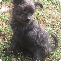 Adopt A Pet :: Tabby - Smyrna, GA