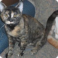 Adopt A Pet :: Missy - Pensacola, FL