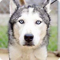 Adopt A Pet :: Valor - Zanesville, OH