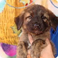 Adopt A Pet :: Lincoln - Oviedo, FL