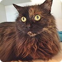 Adopt A Pet :: Harlequin - Salisbury, MA