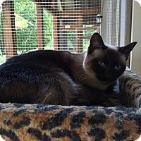 Adopt A Pet :: Muta - Cashiers, NC