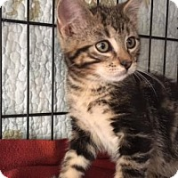 Adopt A Pet :: Spinach - Fort Collins, CO