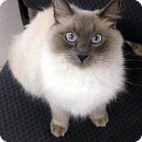 Adopt A Pet :: Marisol - Alvin, TX