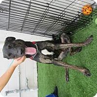 Adopt A Pet :: Ace (Cocoa Center) - Cocoa, FL