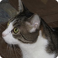 Adopt A Pet :: Fermi (with Bose & Pauli) - Fairfax, VA